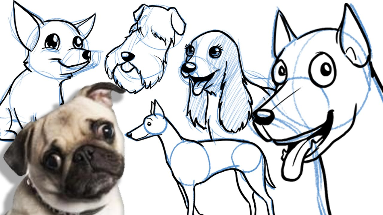 How To Draw A Cartoon Dog All Breeds And On Different Angles