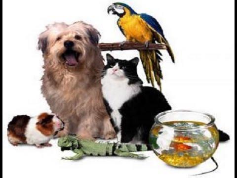 Mascotas top 10 recomendadas para tener en casa youtube - Perros para tener en casa ...