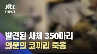 코끼리 수백마리 '의문의 떼죽음'…중독·질병 가능성?  / JTBC 뉴스ON