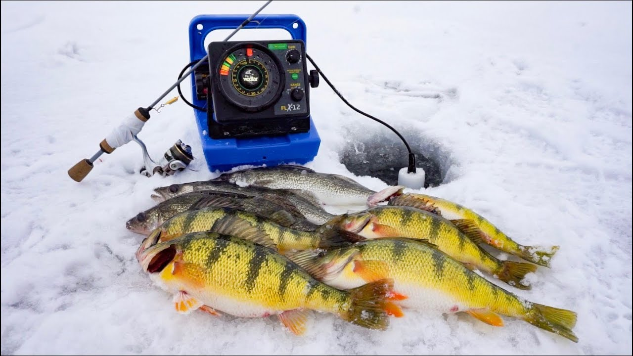 JUMBO Perch and Walleyes: SD Ice Fishing