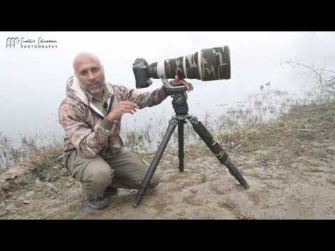 Bird Photography Practical Field Guide – Lens, Camera Settings & More thumbnail