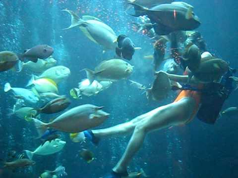 Lunchtime At Pacific Beach Hotel S Oceanarium