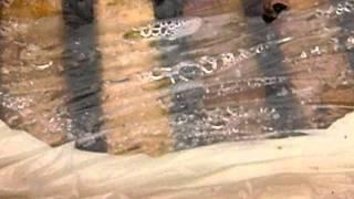Zimovanje pcela ispod PVC-folije