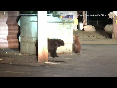 WATCH: Bears Try And Rescue Sib...Humans Finish The Job