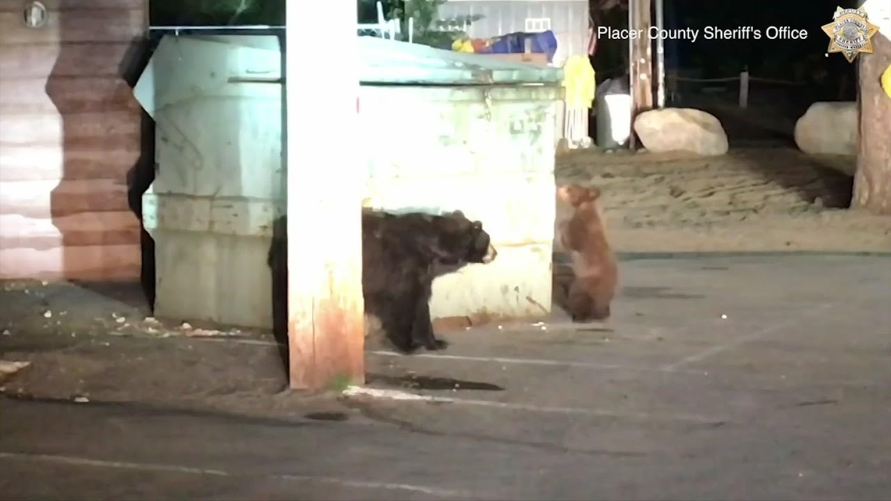 Deputies rescue bear cub trapped in trash bin