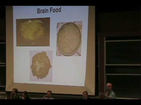 MIT Latke-Hamentashen Debate 2008 - Peter Dourmashkin (L1)