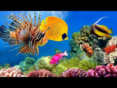 Beautiful Rare Fishes (Min Madura ) / Colorful Amazing Fishes Sri Lanka Zoo
