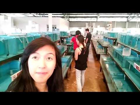 Visiting Coral Farm