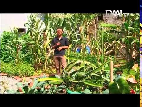 Lokavlora kebun bond bandung