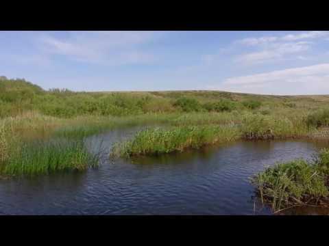 Природа Денисовского района,