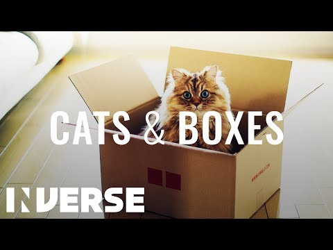 Why Cats Love Cardboard Boxes | Inverse