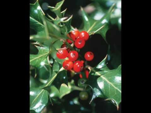 Hanson- Rocking Around The Christmas Tree