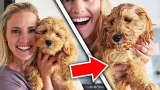 GOLDENDOODLE PUPPY Bath! Before and After | Ellie and Jared
