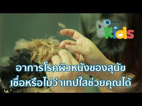 อาการโรคผิวหนังของสุนัข เชื่อหรือไม่ว่าเทปใสช่วยคุณได้ [Animals Speak by Mahidol]