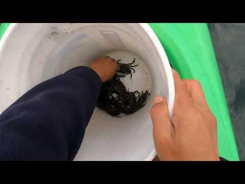 Life Under Covid 19 - Tautog Fishing