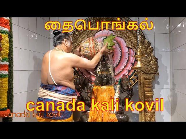 Makar Sankranti Thai Pongal tamil canada kali kovil Harvest Festival Celebration 2020 தைபொங்கல்