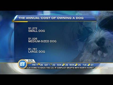 Costs of owning a dog