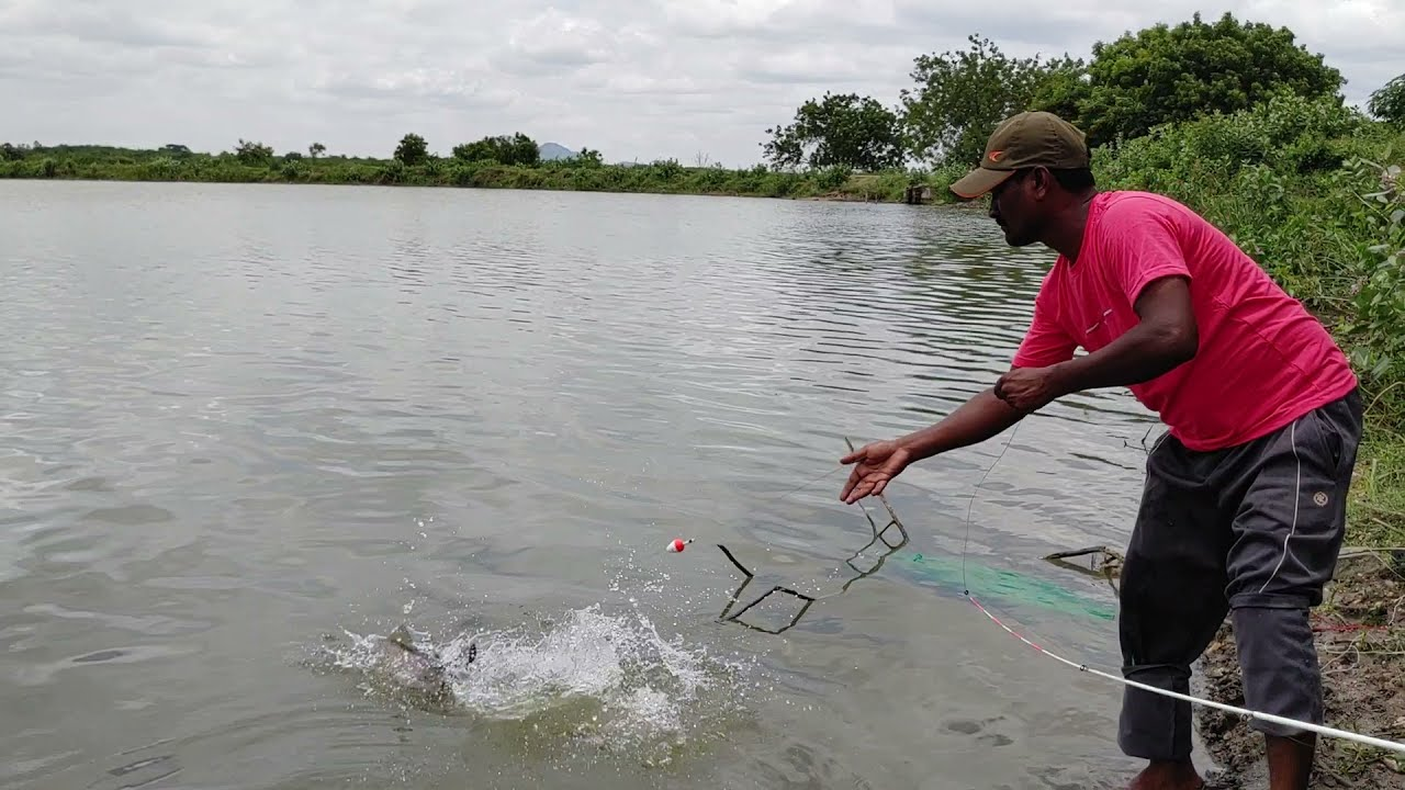 hook fishing | big Redbilled fishes 🎣 catching | unique fishing method