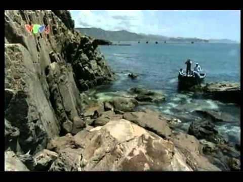http://www.namlinhchiviet.com - Tổ yến -  Yến Việt