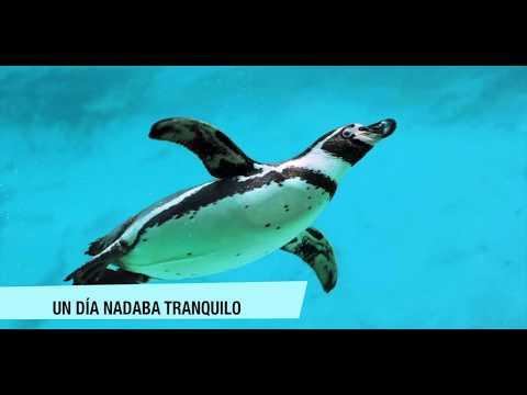 El pingüino que mató a Liberty Valance