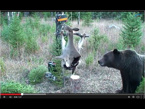 Bears in the Modern World Electric Deer YouTube