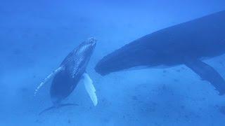 We Swam with the Whales! (Sailing La Vagabonde) Ep. 69