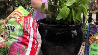 Repotting a Hydrangea : Grow Guru