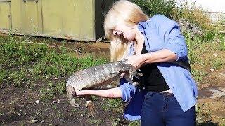 УЧИМСЯ ЛОВИТЬ ОПАСНЫХ ВАРАНОВ. Первый опыт ловли больших ящериц
