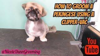 How to groom a pekingese using a clipper vac