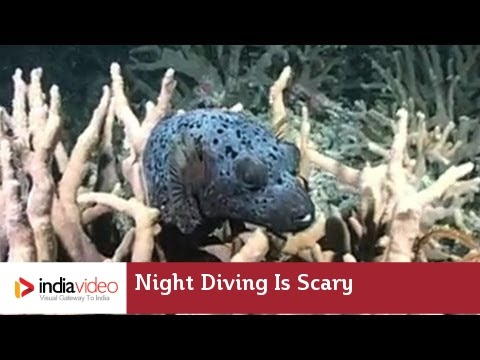 Night Diving is Scary
