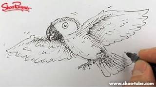 Video How to draw a cartoon Parrot - Spoken Tutorial download MP3, 3GP, MP4, WEBM, AVI, FLV April 2018