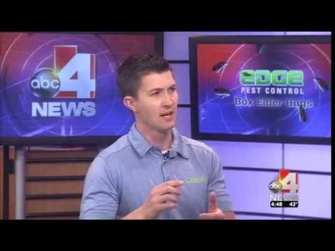 ABC 4 Interview - Boxelder Bugs
