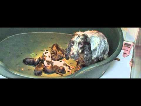 Puppy Farms, RSPCA Report & Animal Welfare Minister George Eustice interviewed 2016