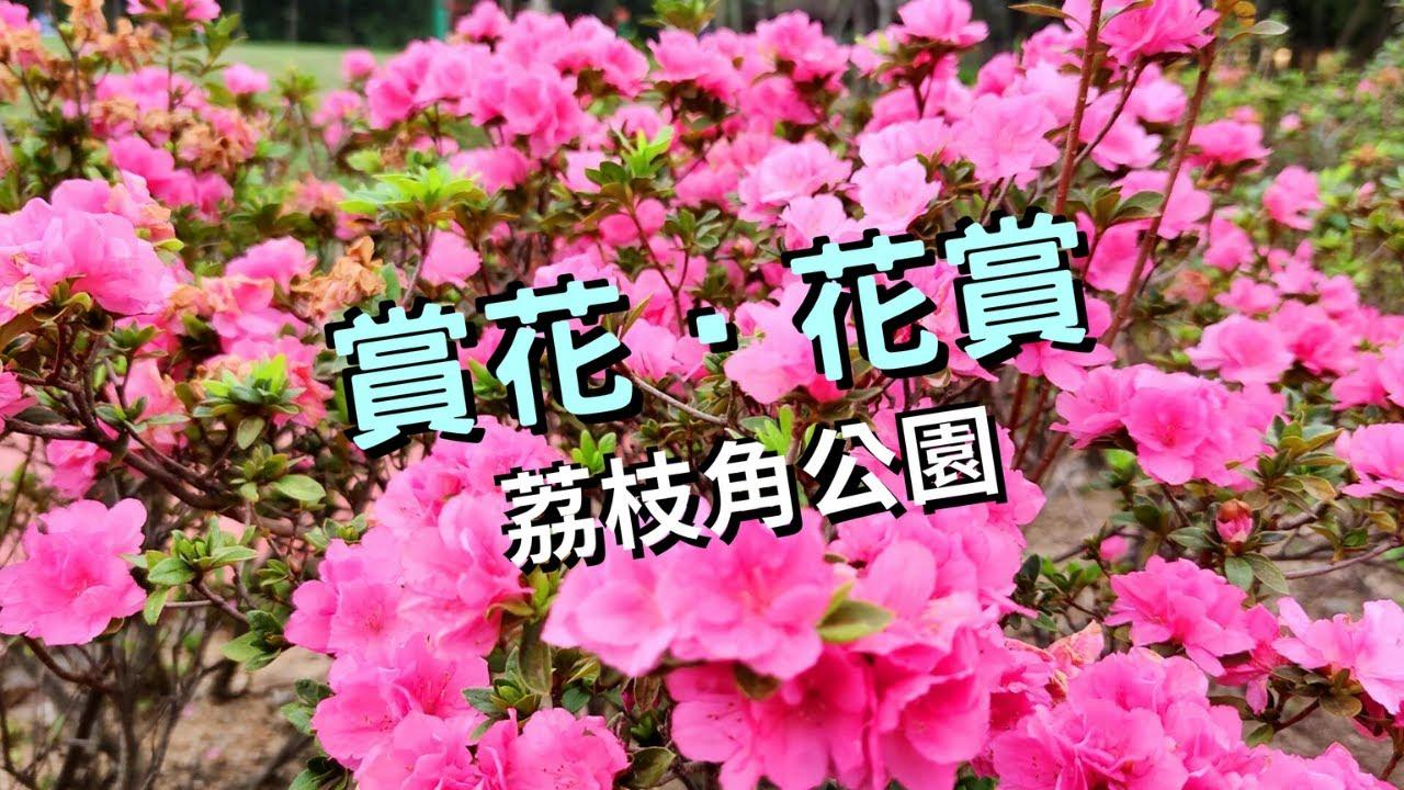 賞花‧花賞@荔枝角公園│賞花※香港好去處│長沙灣│香港Hong Kong 4K VNT流浪地圖 - YouTube