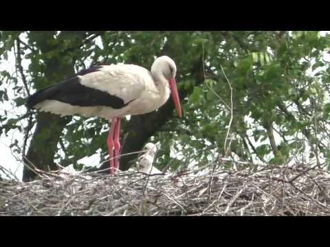 Вопрос: Что будете делать, если на крыше вашего дома аист совьет гнездо?