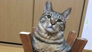 お部屋の掃除中、猫がこちらを眺めていて…  思わず2度見した態度とは…? thumbnail