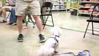 Trumans Graduation At Petsmart Training Class October 2007