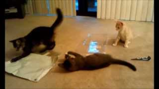 Kitten Play Time With Household Items