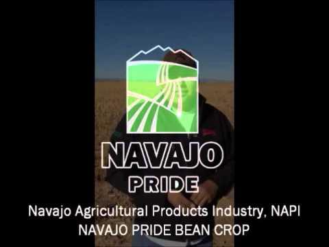navajo agricultural products industry napi farmington nm - 480×360