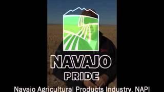 Navajo Pride Bean Crop
