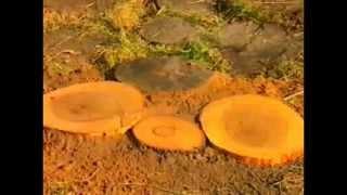 Деревянная дорожка(В последние годы большой популярностью пользуются дорожки с деревянным покрытием. Данный способ мощения..., 2014-01-25T17:28:38.000Z)
