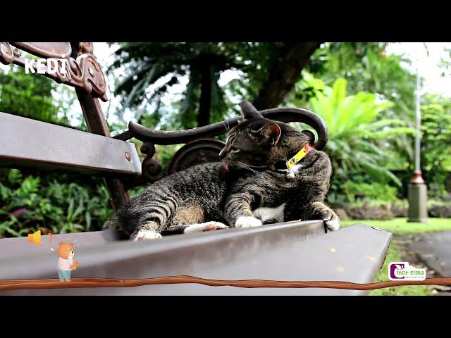 Bobi Hayvanları Tanıyor - Okul Öncesi Eğitim - Cici Mici 2 Yaş Eğitim Seti
