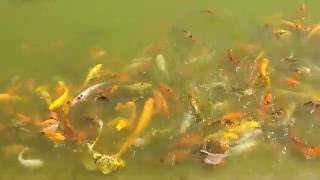 �������� ���� Colored fish dancing in lack.... ������
