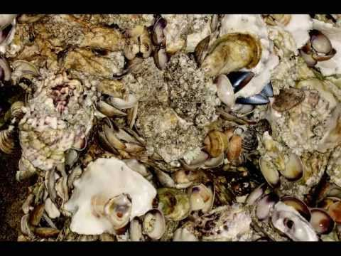 The Oyster Is Our Friend - Folk Song