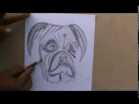 Draw Boxer Dog Sketch Youtube