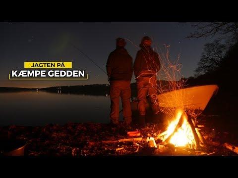 JAGTEN PÅ KÆMPE GEDDEN #4 - Storgedde med Bearnaise | Pike Fishing