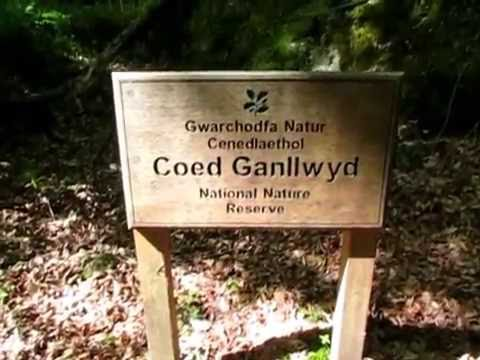 Cefn Coch Gold Mine Wales