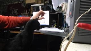 кошка печатает на принтере