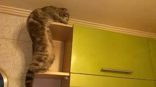 Как кошка падает с полки