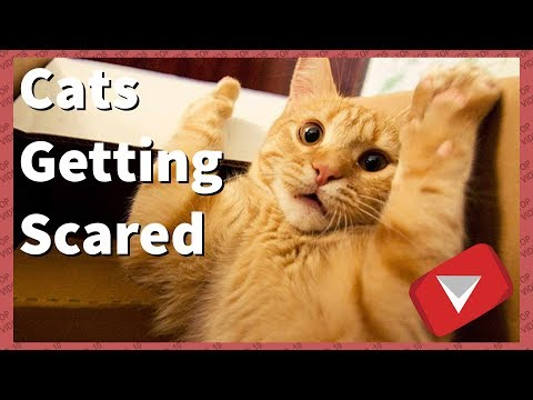 Cats Getting Scared Compilation [Funny] (TOP 10 VIDEOS)